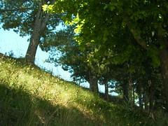 Ostinato raggio di sole (alfiererosso) Tags: trees verde green nature grass alberi arboles meadow natura erba prato grun blaumen