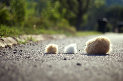 Tribble Crossing