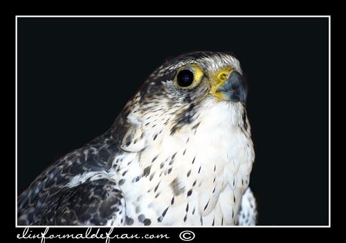 Aguila 3