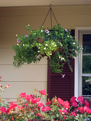 purple and yellow hanging basket
