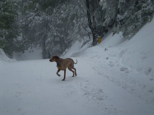 Lucky Dog In Southern California Snow