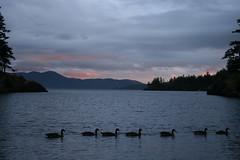 Doe Bay (moomoobloo) Tags: orcasisland doebay
