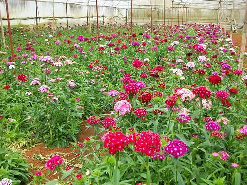 Flower farm 2