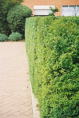 F1000035 (janmahoney) Tags: topiary hedges