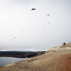 helmut and company (eyebex) Tags: animals saveme3 deleteme10 squarecrop ravens birdsblack
