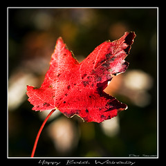 Happy Bokeh Wednesday! (Dave the Haligonian) Tags: autumn red canada fall sorry wednesday leaf maple bokeh balls oops supershot hbw imeant happybokehwednesday bokehboobs yeahbokehballs ijustpreferboobs mwuhaaa