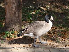 DSC00696 (genericzombie) Tags: wildbirds louisvillekentucky louisvillezoo captivebirds sonyh50