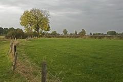 Autumn (Niquitin) Tags: autumn tree fall netherlands field weide nikon herfst nederland meadow boom veld niquitin d80 nederlandvandaag dickbruinsma