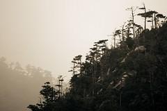 Miyajima forest (g u i l l a u m e) Tags: deleteme5 deleteme8 deleteme deleteme2 deleteme3 deleteme4 deleteme6 deleteme9 deleteme7 forest saveme4 saveme5 saveme6 saveme saveme2 saveme3 deleteme10 miyajima guillaume canonef70200mmf28lisusm canoneos40d wwwsnapiorg