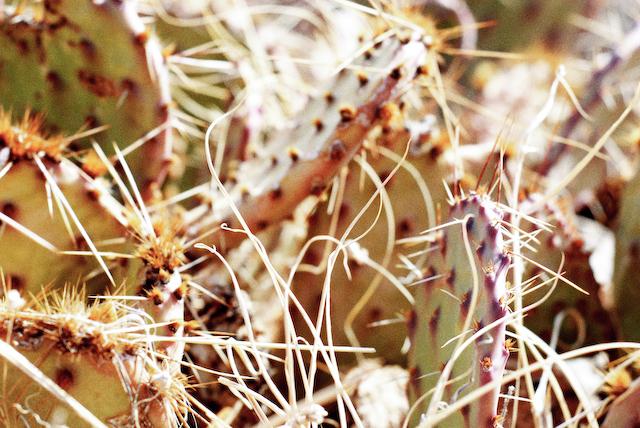 cactus in vintage tone