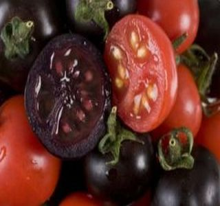 purple-tomatoes-cancer