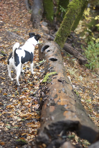 Existing fallen logs were used to mark the trail boundary. You must examine these carefully as small furry critters may be hiding in them.