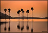 A Dusk beyond these palm trees (saternal) Tags: sunset forest palmtrees palakkad kava indiavillages saternal malampuza