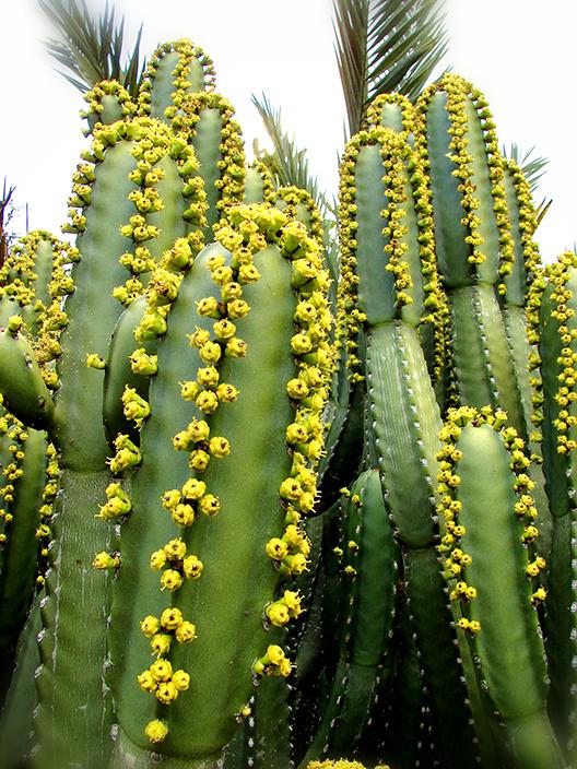 Royal Botanic Gardens Sydney - Succulent Garden (Image Heavy) 3009397855_7e5fd0e4e3_o