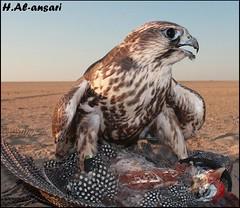 (Hamza AL-ansari) Tags: magazine photo kuwait hamza  supershot alansari