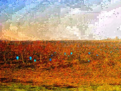 Pauillac-Margaux, n�5, im n�09366
