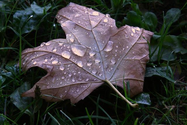 Leaf, Lair Hill Park