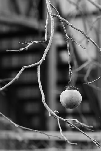 今年最後の柿