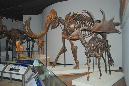 Irish Elk and Mammoth