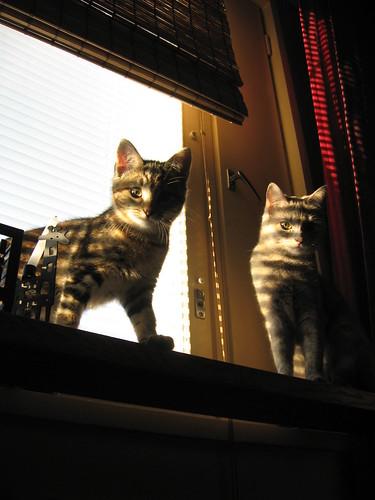 Solmu & Vimma