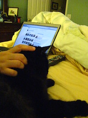 Huggy Bear looks at Flickr pictures on the new laptop