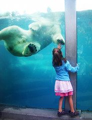 high five (-Antoine-) Tags: bear wild white canada water girl zoo kid paw topf50 eau fuji hand quebec jardin qubec finepix paws polar z10 enfant fille blanc ours zoologique sauvage polaire lacsaintjean lacstjean saintfelicien stflicien saintflicien stfelicien jardinzoologique saguenaylacstjean saguenaylacsaintjean dscf1289