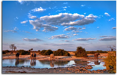 Elephant Watering Hole (Chad Galloway Photo) Tags: africa travel sky elephant reflection water clouds nationalpark sony safari elephants botswana waterhole chobe hdr africanelephant wateringhole a700 colorphotoaward
