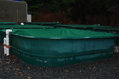 3 -New tanks are now installed (marineharvestcanada) Tags: river hatchery quatse