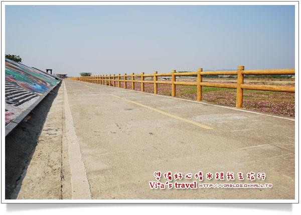 【南投花卉嘉年華】南投市綠美橋-貓羅溪自行車道花海