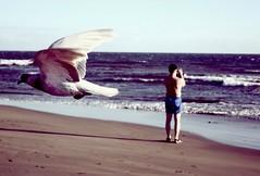 IMG_3912 (ais3n) Tags: ocean camera shadow sea man bird beach strand standing canon eos coast fly flying al wings meer sundown capture vogel photgraphy kste flug flgel 400d ais3n