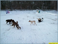Java, Aidan, Charlie, Roxie & Doug (Alternative Dog Daycare) Tags: dogdaycare alternativedogdaycare tuesdaydaycarecrew