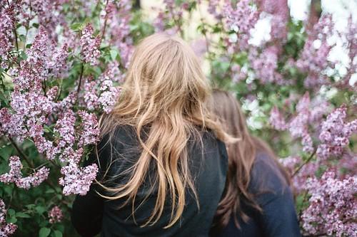 lilac bush hug, flowers ensconsing, all those sorta circles