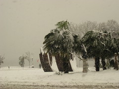 Palm Trees In a Blizzard (dtk_guy) Tags: winter snow canada vancouver palmtree englishbay   canoncamera canonsd1100