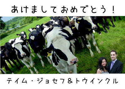 Happy New Year of the Cow!