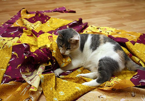 It's not easy quilting with a cat