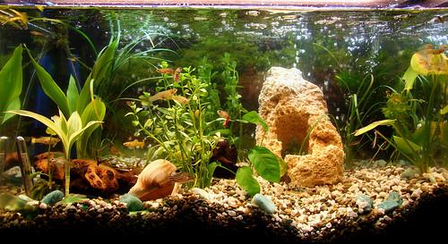 The Fish Tank - 219/365