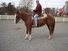 Ac4H Stetson - Quarter Horse (Another Chance for Horses) Tags: horse chestnut quarterhorse ac4hcom