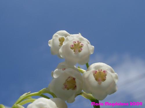Flower20090522-1