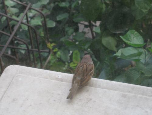西安交大住宿区的小鸟