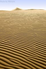 Sand Waves (TARIQ-M) Tags: texture landscape sand waves desert dunes riyadh saudiarabia hdr         canon400d       canonefs18200mmf3556is