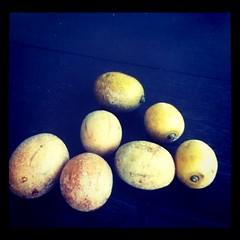 Kedongdong fruits from Grandma's tree