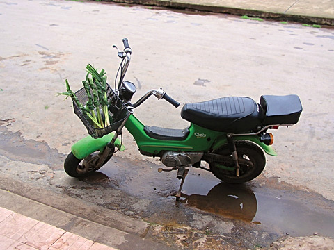 Honda Chaly on lemongrass run