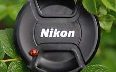 Even Lady bugs love Nikon! (ineedathis) Tags: fab blueribbonwinner supershot fineartphotos golddragon mywinners abigfave platinumphoto anawesomeshot colorphotoaward impressedbeauty diamondclassphotographer ysplix excellentphotographerawards theunforgettablepictures betterthangood theperfectphotographer goldstaraward