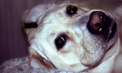 In posa (lorenzomarinelli) Tags: dog cane tommaso tommy