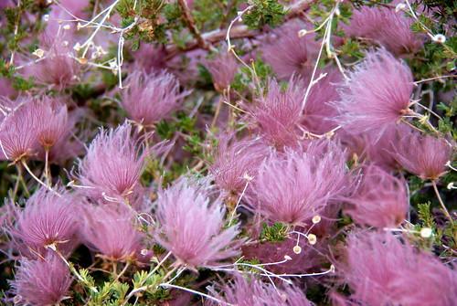 Apache Plume - the Troll Doll hair bush