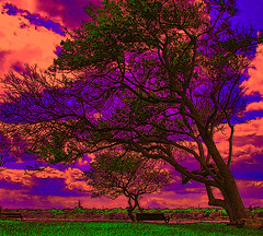 Tree by the Light (Rusty Russ) Tags: ocean camera flowers trees light party summer arizona sky usa cloud house color tower art cars love college beach nature strange graveyard rose contrast america photoshop manipulated john fun photo yahoo google interesting twilight colorful flickr marblehead state image unique flag president great picture picasa super myspace brain best psycho hillary change salem fav olympic now republican universe democrat j1 northernlights 08 saturate c1 barack stumbleupon flyingcars paly roseflower freeimage psdtuts