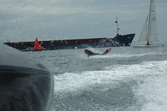 DSC_0192 (jimcoleman1976) Tags: speedboat boogieboard
