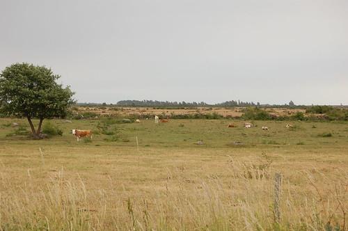 世界遺産、エーランド島南部農業地の風景