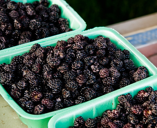 Freshly Picked Black Raspberries
