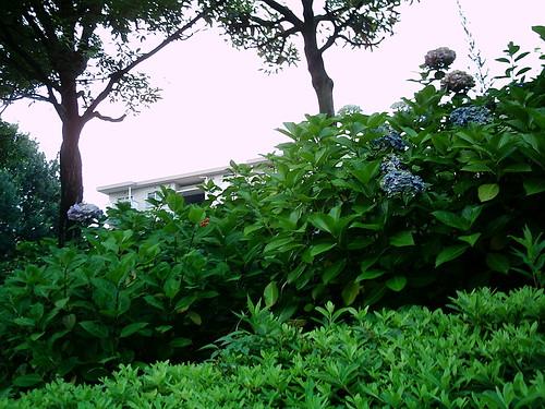 【写真】VQ3007で撮影した庭木越しの団地